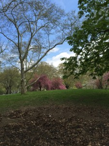 Central Park on May 1
